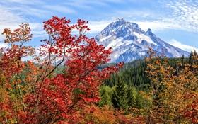 Картинка лес, осень, ветки, листва, цвета, деревья, яркие