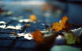 Картинка листья, макро, улица