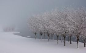 Обои зима, пейзаж, снег, деревья, туман
