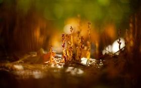 Обои обои, растения, фото, природа, фон, макро
