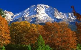 Обои осень, лес, горы, Калифорния, США