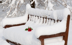 Обои природа, романтика, роза, Снег, лавочка