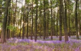 Картинка лес, трава, лучи, свет, деревья, цветы