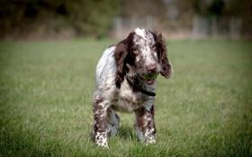 Картинка взгляд, друг, мяч, собака