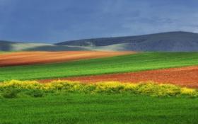 Картинка поле, пейзаж, природа, холмы, поля