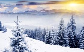 Обои лес, солнце, снег, рассвет, ёлка, сопки