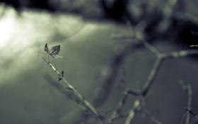 Обои макро, природа, лист, ветка