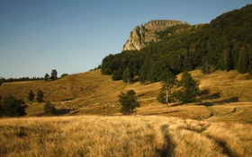 Обои трава, деревья, горы, природа, скала, фото, дерево