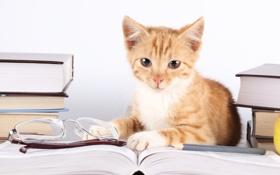 Картинка кот, полосатый, книги, взгляд, очки