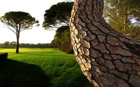 Картинка зелень, лето, трава, деревья, дерево, газон, вид