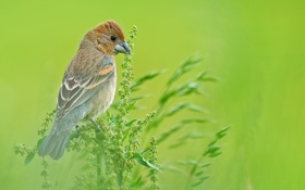 Обои птица, луг, растение, трава, поле