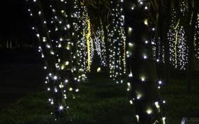 Обои украшения, деревья, ночь, праздник, гирлянды, photographer, fairy lights