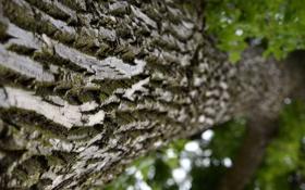 Обои макро, дерево, мох, размытость, кора