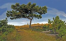Картинка трава, деревья, фото, природа, красивые картинки, красота, дерево