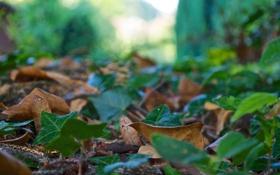 Обои листочки, зелень, блики, земля, макро, размытость