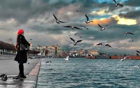Картинка чайки, Санкт-Петербург, Нева