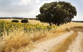 Картинка пейзаж, подсолнухи, небо, дорога, лето