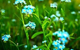 Картинка зелень, лето, цветы, природа