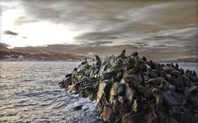 Картинка горы, скалы, залив, морские, котики