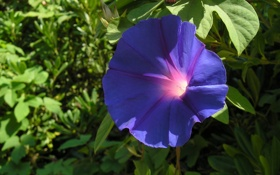 Обои цветок, макро, листок, растение