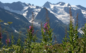 Обои снег, цветы, горы, природа, настроение, вершины, красота