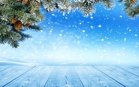 Картинка зима, снег, снежинки, елка, шишки, nature, winter