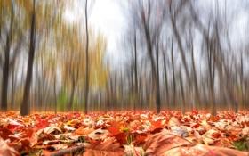 Обои листья, лес, осень, парк, деревья