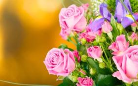 Картинка фон, розы, букет, бутоны, ирисы
