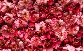 Картинка желтые, розовые, цветы