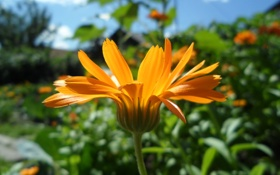 Обои цветы, макро, лето