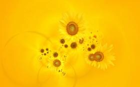 Обои цветы, желтый фон, Подсонухи