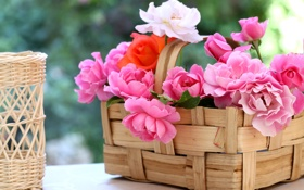 Обои розы, © Elena Di Guardo, лепестки, корзинка