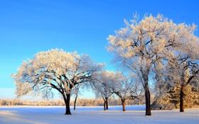 Картинка зима, снег, небо, парк, деревья