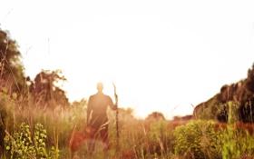 Обои лето, трава, листья, солнце, растения, силуэт, парень
