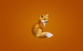 Обои лиса, хвост, оранжевый фон, fox, пушистая
