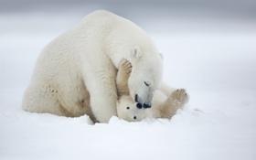 Картинка снег, игра, медвежонок, белый медведь, Арктика