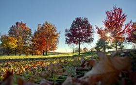 Обои осень, небо, листья, деревья, природа, фото, дерево