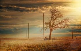 Обои поле, Дерево, столбы