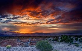 Обои небо, дерево, краски, пустыня, долина, кусты, сухое