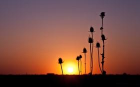 Картинка небо, солнце, макро, закат, растение, горизонт, силуэт