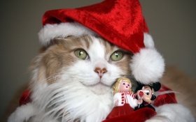Обои кошка, фон, праздник