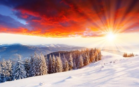 Картинка холод, зима, солнце, лучи, свет, снег, деревья