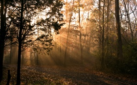 Обои осень, лучи, свет, природа, утро
