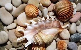Картинка природа, камни, ракушки, морской мир