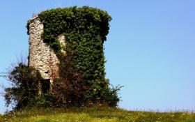Обои небо, трава, башня, руины, плющ