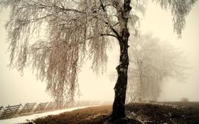 Картинка зима, иней, дорога, снег, туман, дерево, берёза