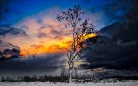 Обои зима, небо, снег, тучи, дерево, зарево