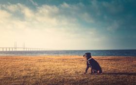 Обои облака, трава, небо, мост, озеро, собака