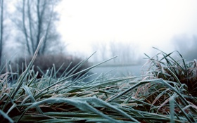 Обои иней, осень, трава, деревья, озеро, боке