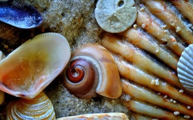 Обои песок, море, дно, раковина, ракушки